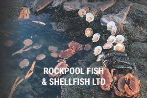 rockpool-fish